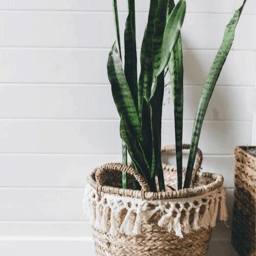 Boho plants with basket