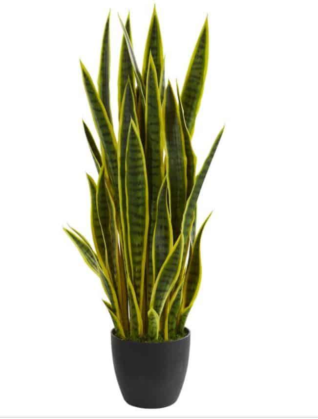 boho plant for decor