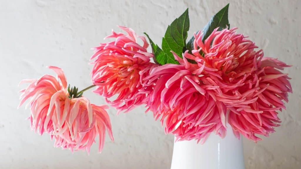 Home styling with flowers for spring