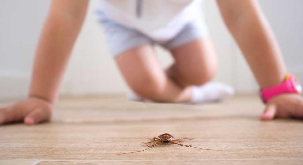 Pet Safe Roach Killer {Get Rid of Those Pests}